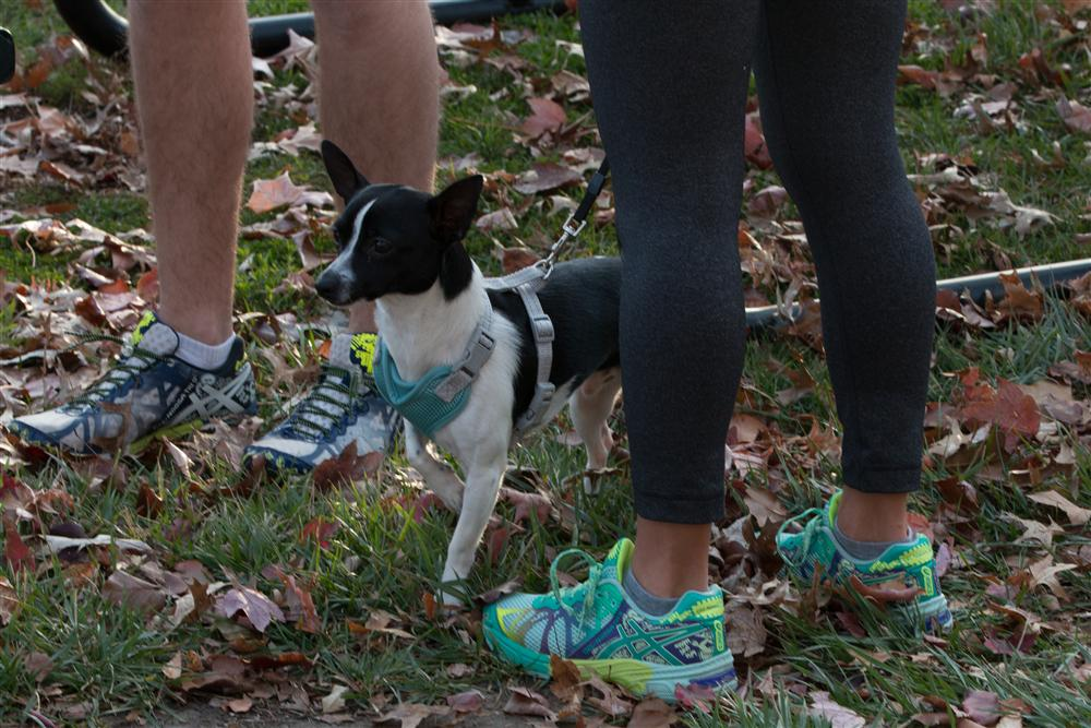 Dog at the Turkey Trot